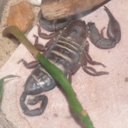 Scorpions – Is it impossible to kill them?