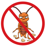 Arizona weather extremes sends the bugs packing – Indoors that is!