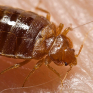 Bed Bugs – Address the problem before it's too late!