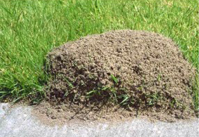 In Tempe Arizona And The Surrounding Areas Of East Valley Maricopa Ants Can Transform Your Yard Even Kitchen From A Relaxing Paradise To