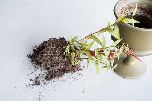 houseplants-gnatproblems Tiny Flies Around Houseplants on